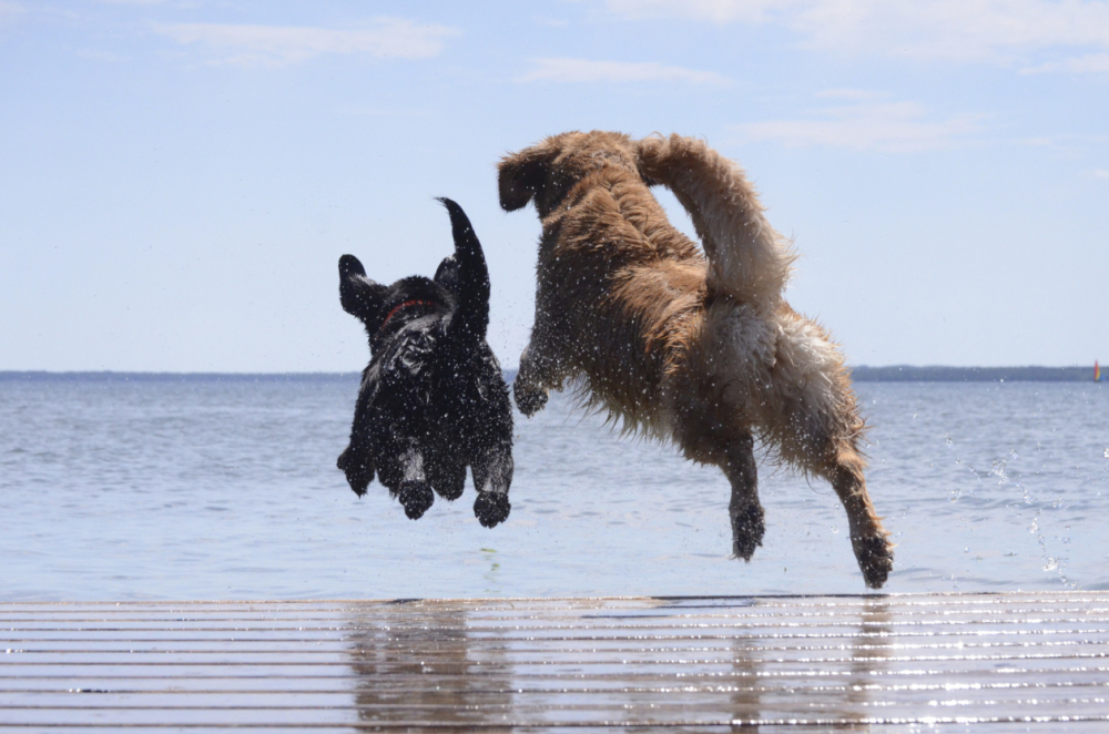 Jumping with Joy - The Bodyguard Print version is selling
