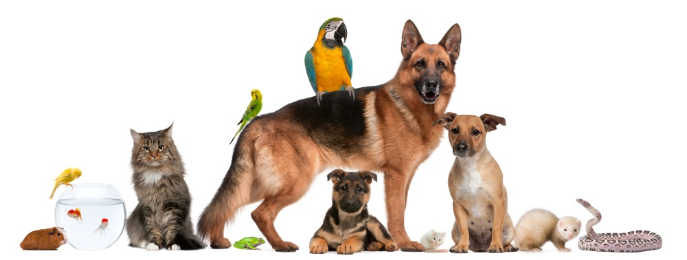 Dogs, cats, small animals and birds