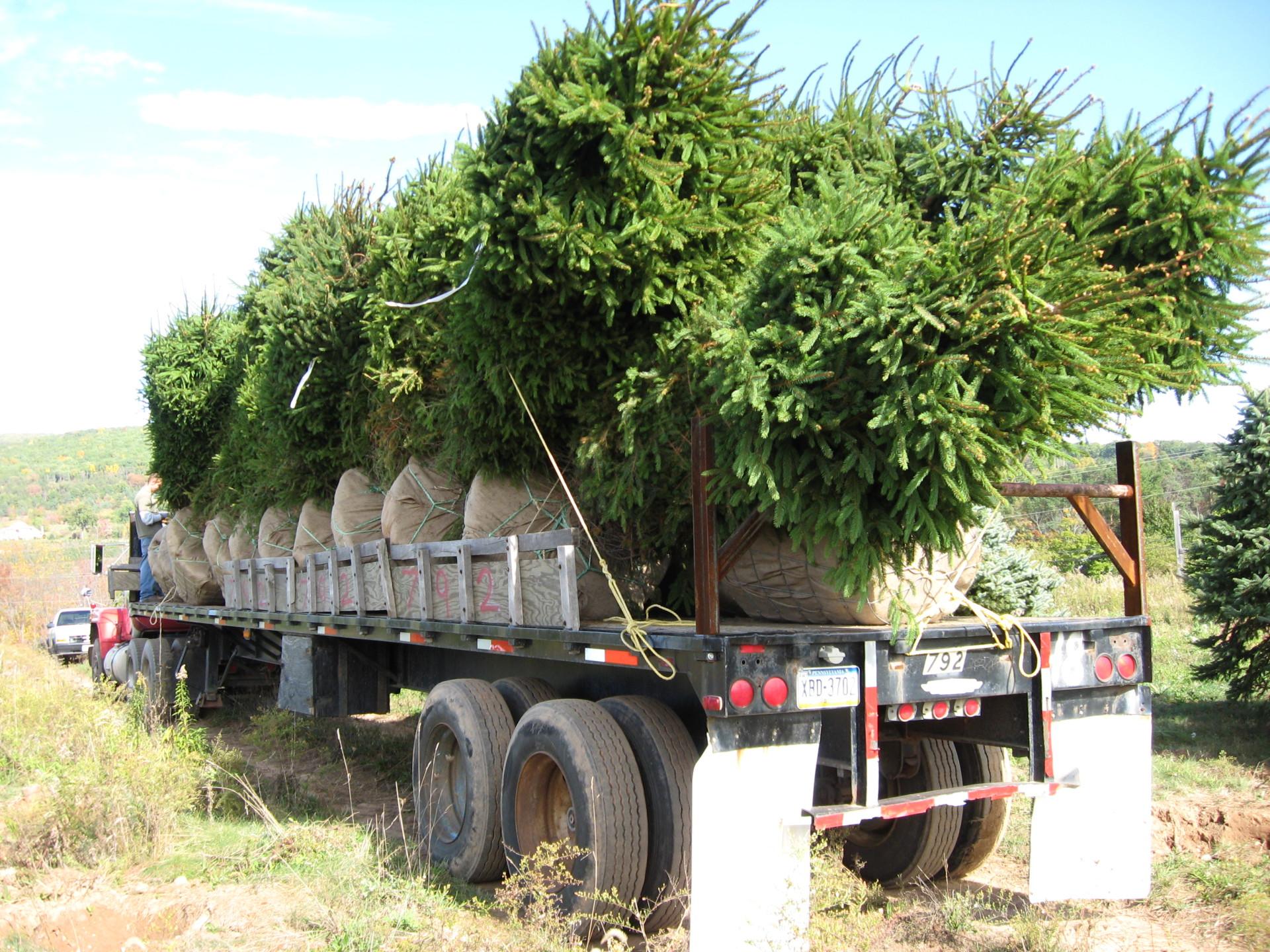 dug trees
