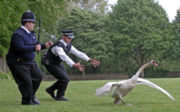 Review A Day: Hot Fuzz