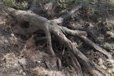 Tree Roots & Tree Stumps