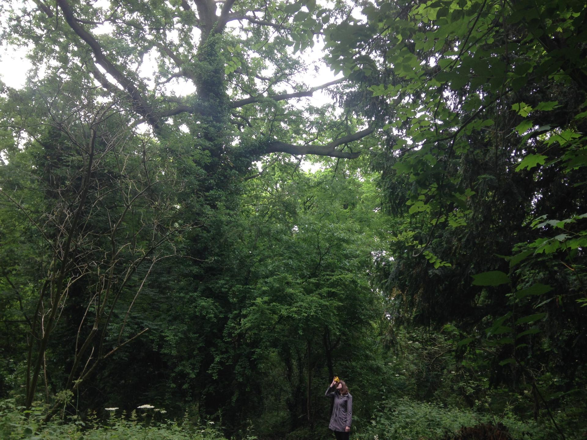 Tree Consultancy