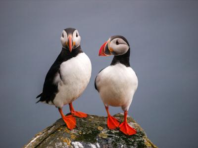 Puffins & Seals Trip £20