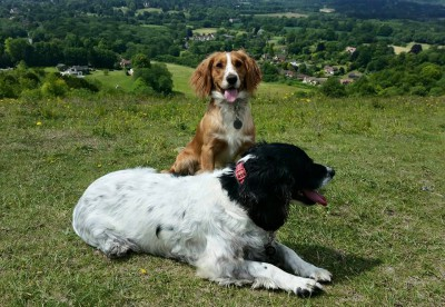 blue and annie at Reigate Hill
