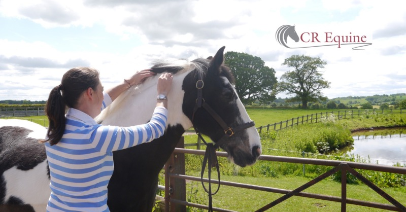 Equine sports massage