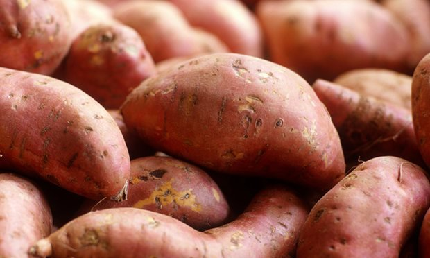 How to grow your own Sweet Potatoes