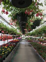 we specialize in amazing hanging baskets