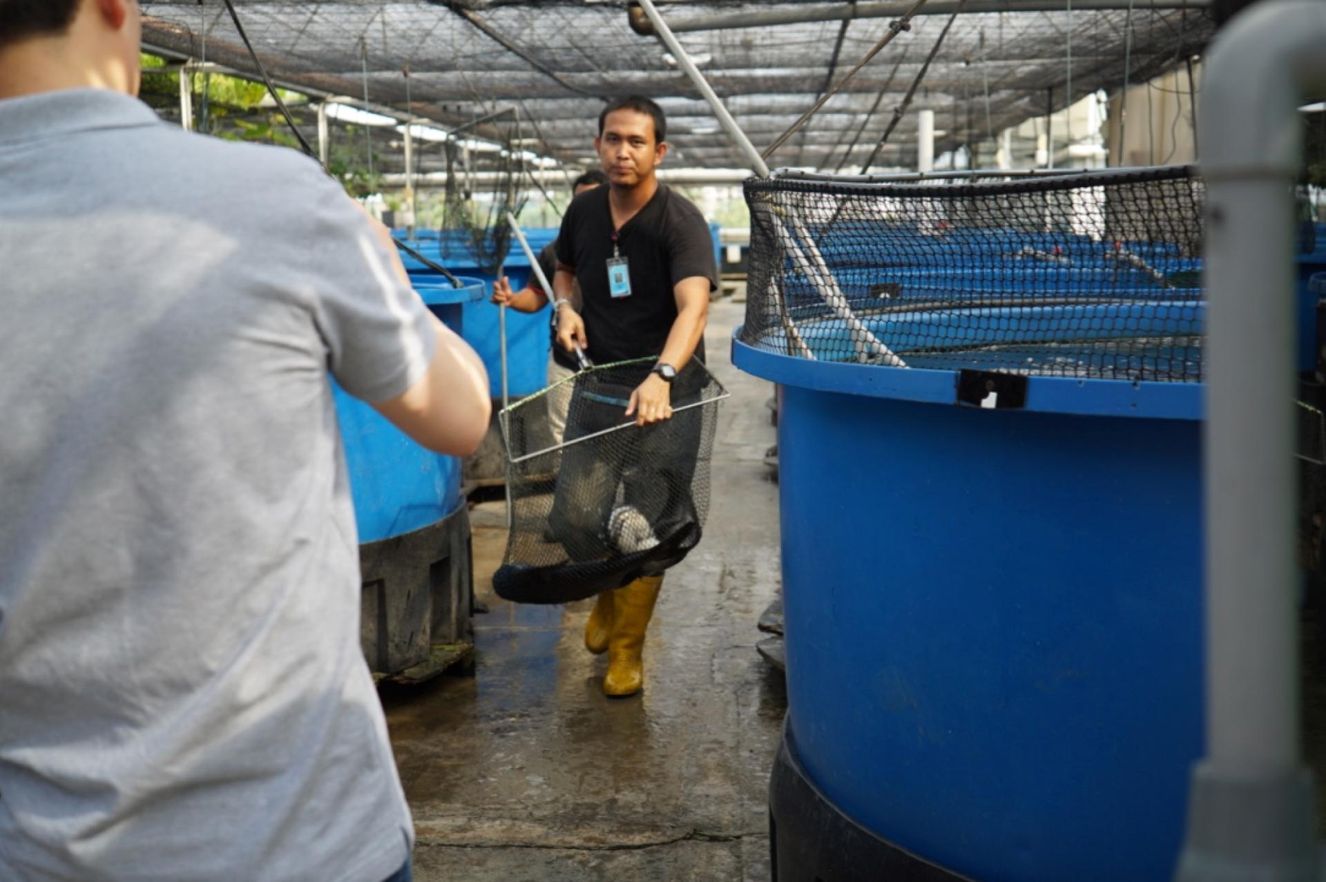 Rooftop Fish Farm - AutoPot™ Aquaponics