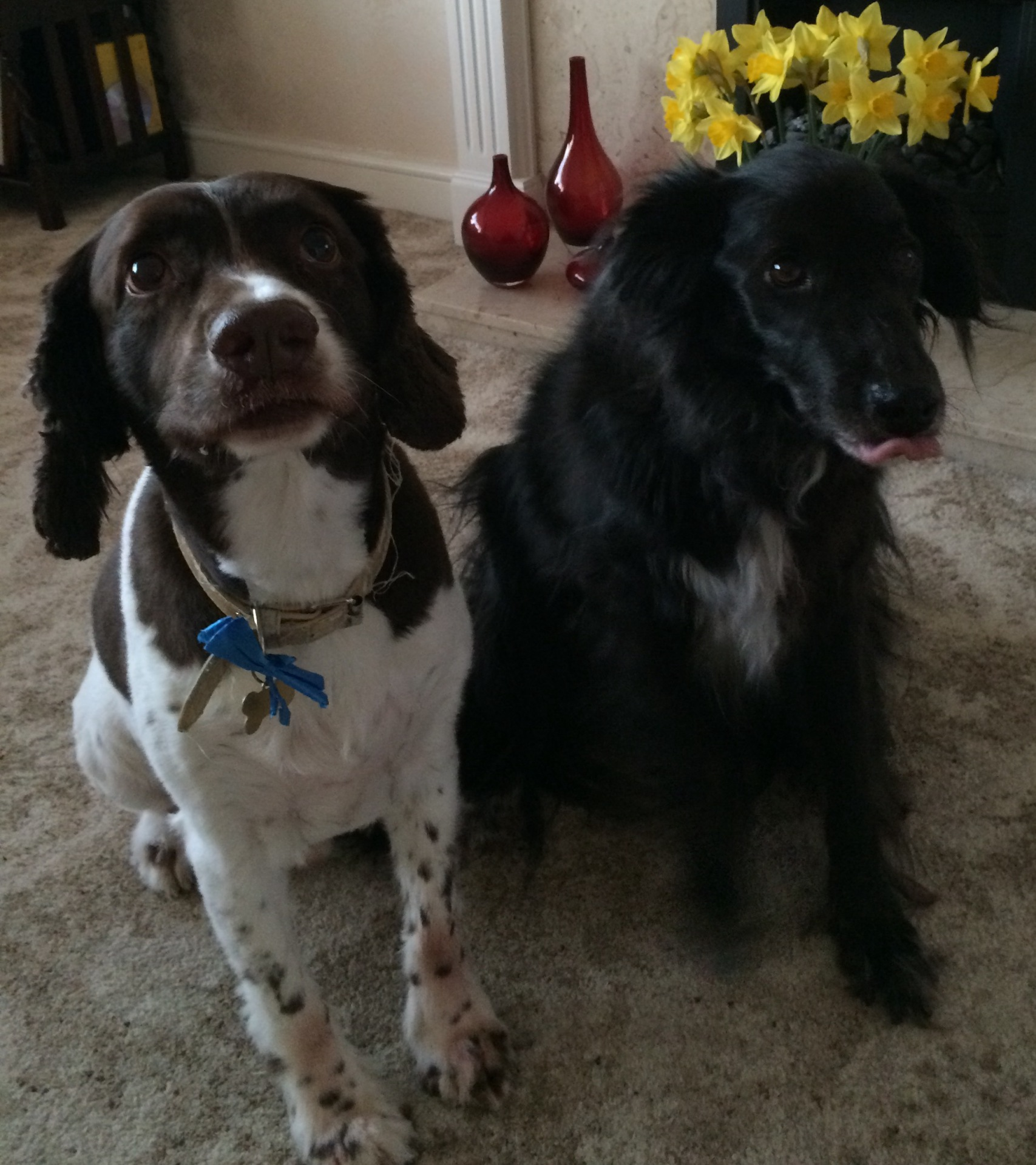 Dog Training Rugeley: Small Animal Mobile Veterinary Acupuncture In Staffordshire