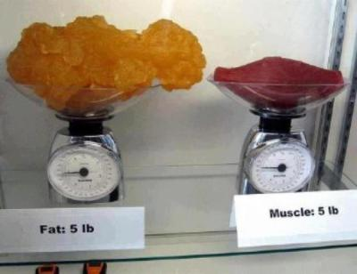 Losing Fat While Gaining Muscle