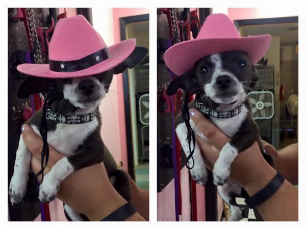 Cowgirl Arya