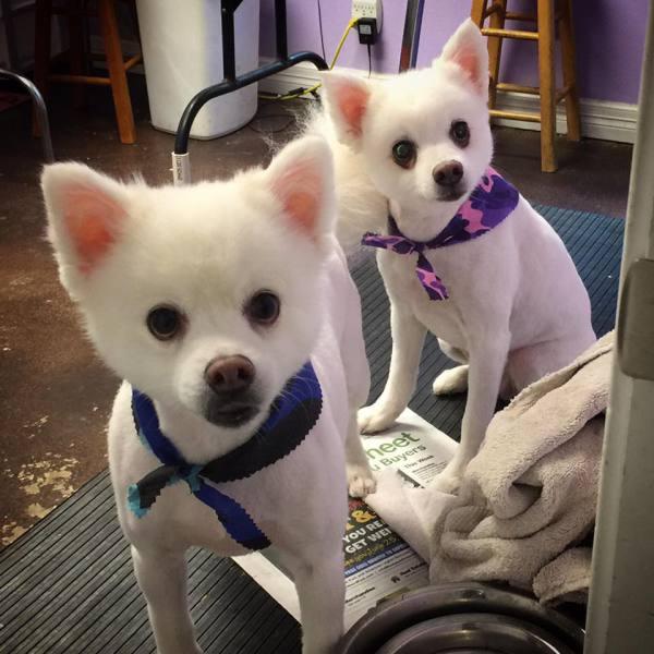 Zimon and Zoe