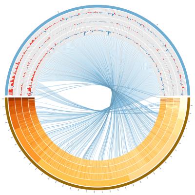 miRNA-mRNA interactome