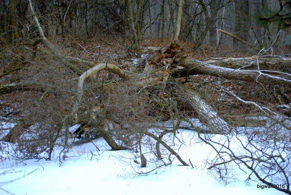 HIgh Park Winter-Walter Tautorat