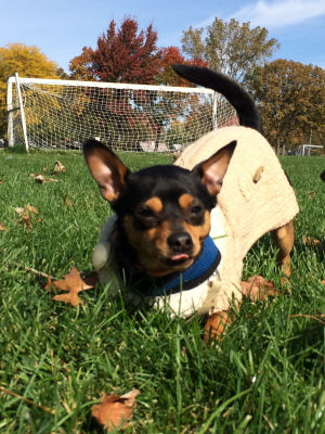 True Heart Happy Tails - Adoption Stories