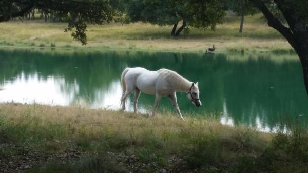 Ranch Improvements