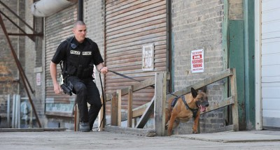 tracking, harness, tracking harness, police dog, K9 Storm