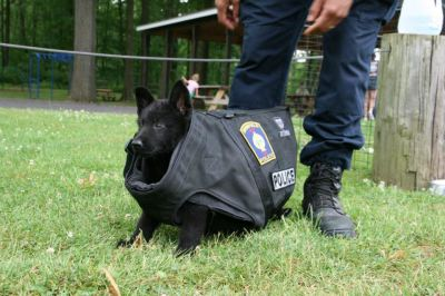 Puppy Trying on Dog Body Armor