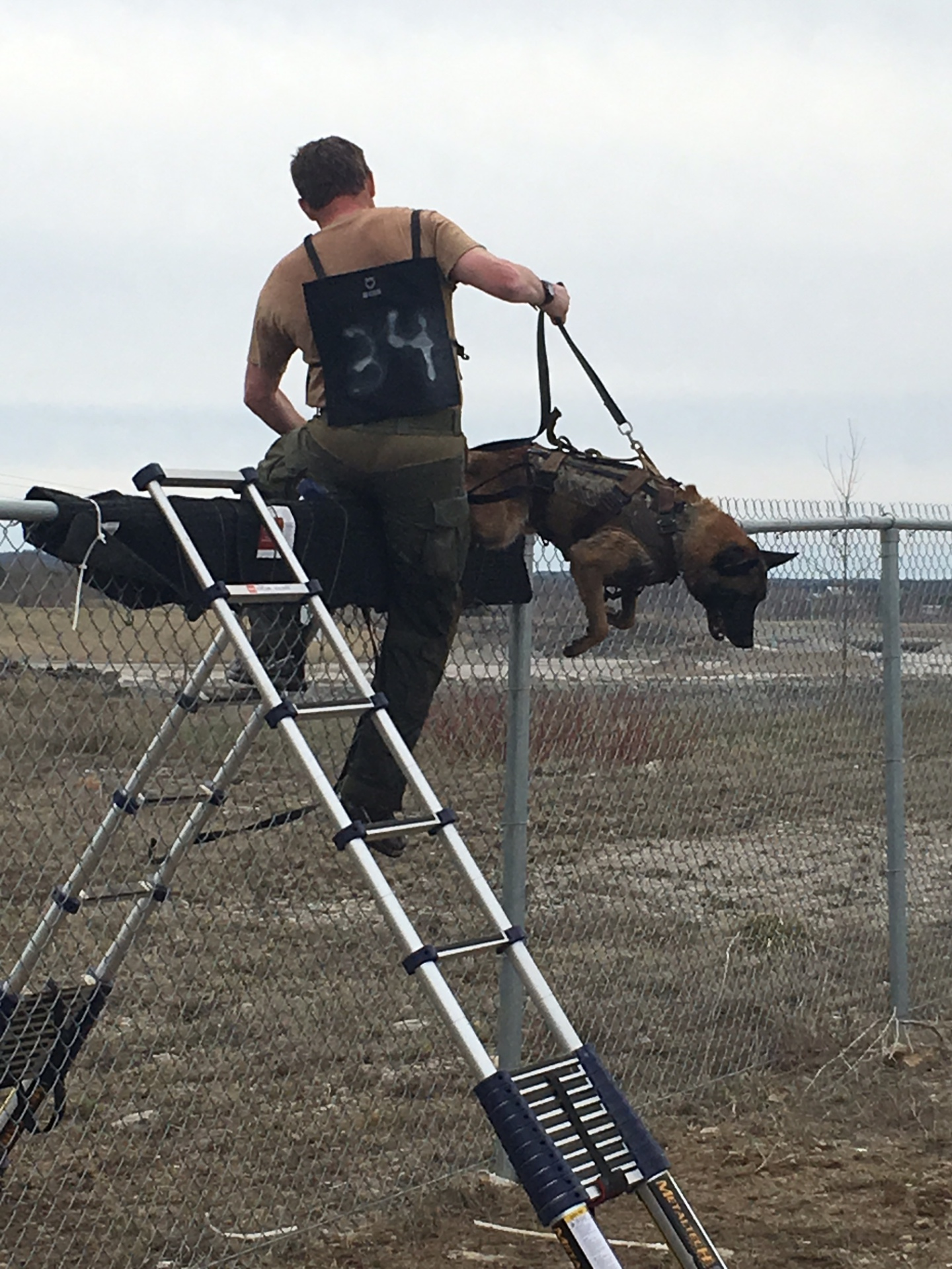 Dog jumps over a fence wearing K9 Storm Gear