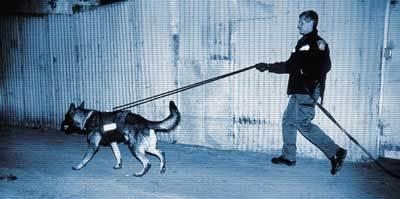 Dog tracking in a K9 bulletproof vest