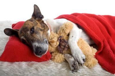 Common Reasons For Diarrhea in Dogs