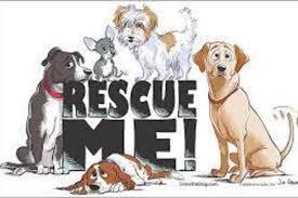 Animal Shelter : Hope Animal Rescue