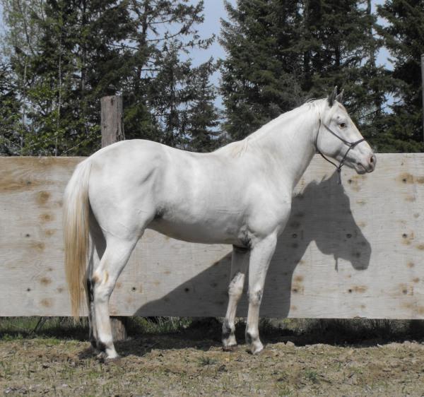 Talisman Horses, les news May2014-horses-025_600
