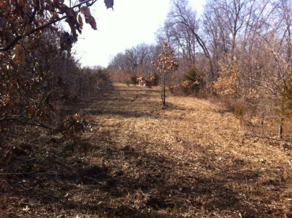 Habitat Management & Improvements
