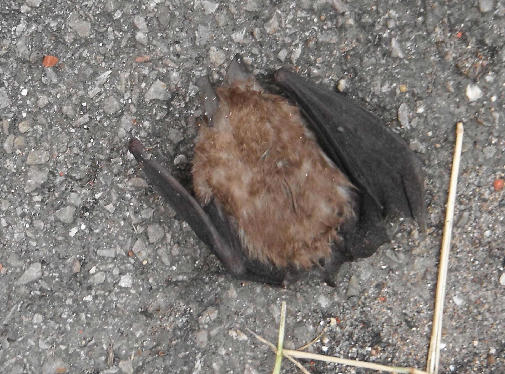 Bat Walk Experiences