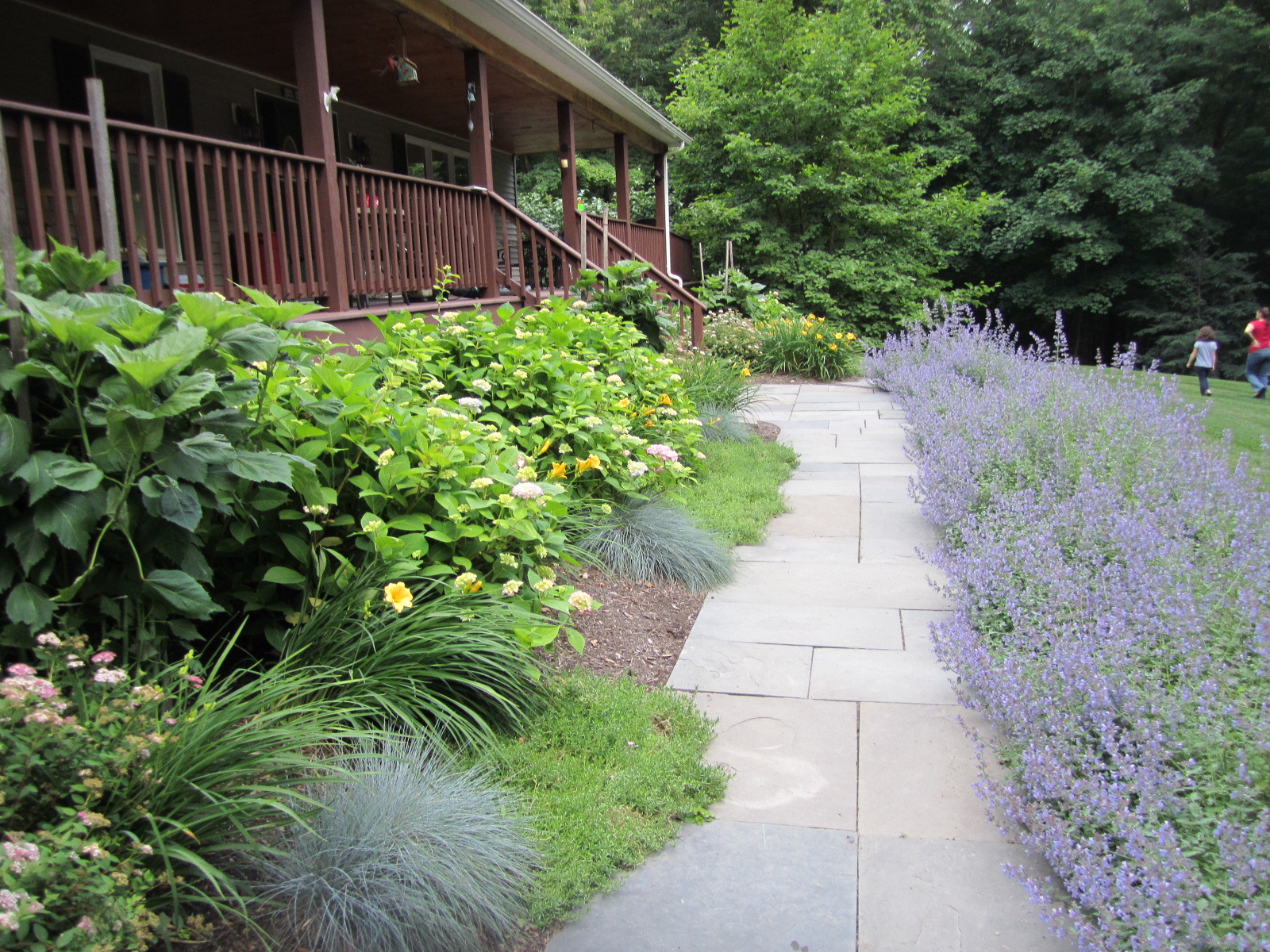 Natural cleft-cut bluestone walkway with landscaping