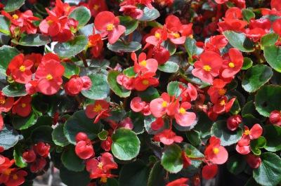 Tree, Shrub, Perennial, Annual, Tropical