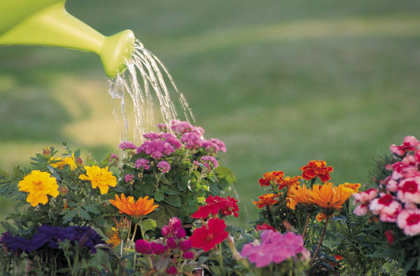 Hot Summer Tips for Watering the Garden