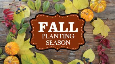 Fall Planting 101