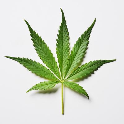 Marijuana isn't going to help this guy...