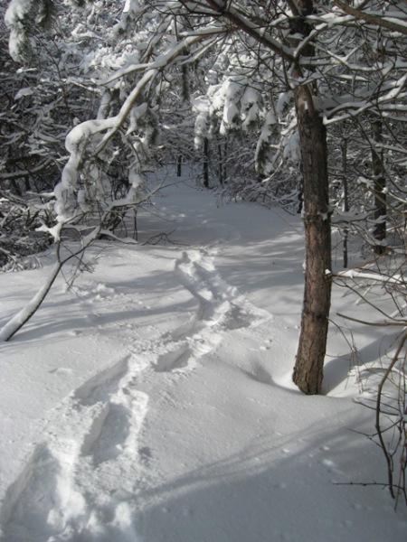Snowshoe Trails Onsite