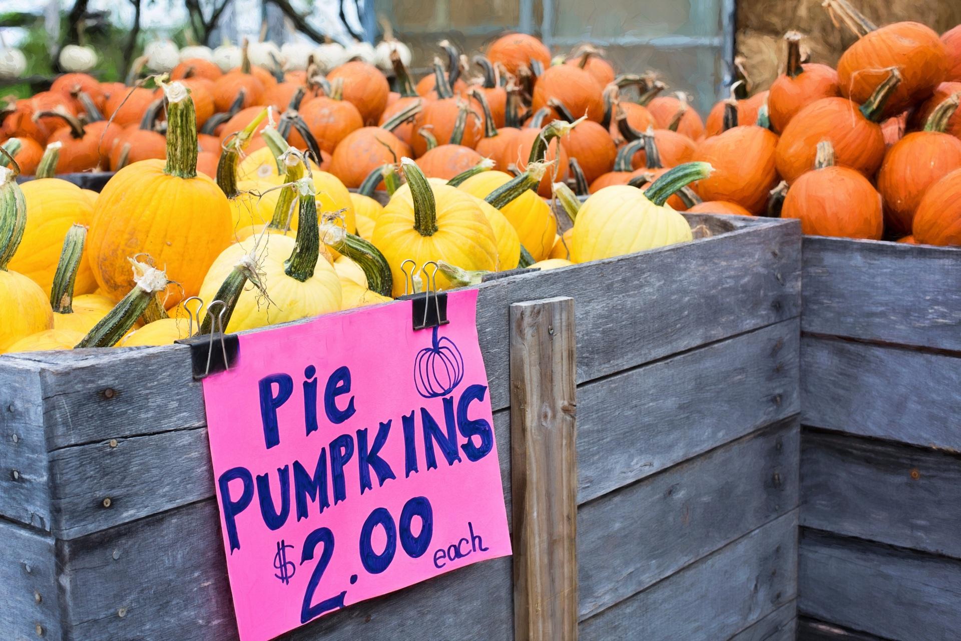 pumpkins-936517