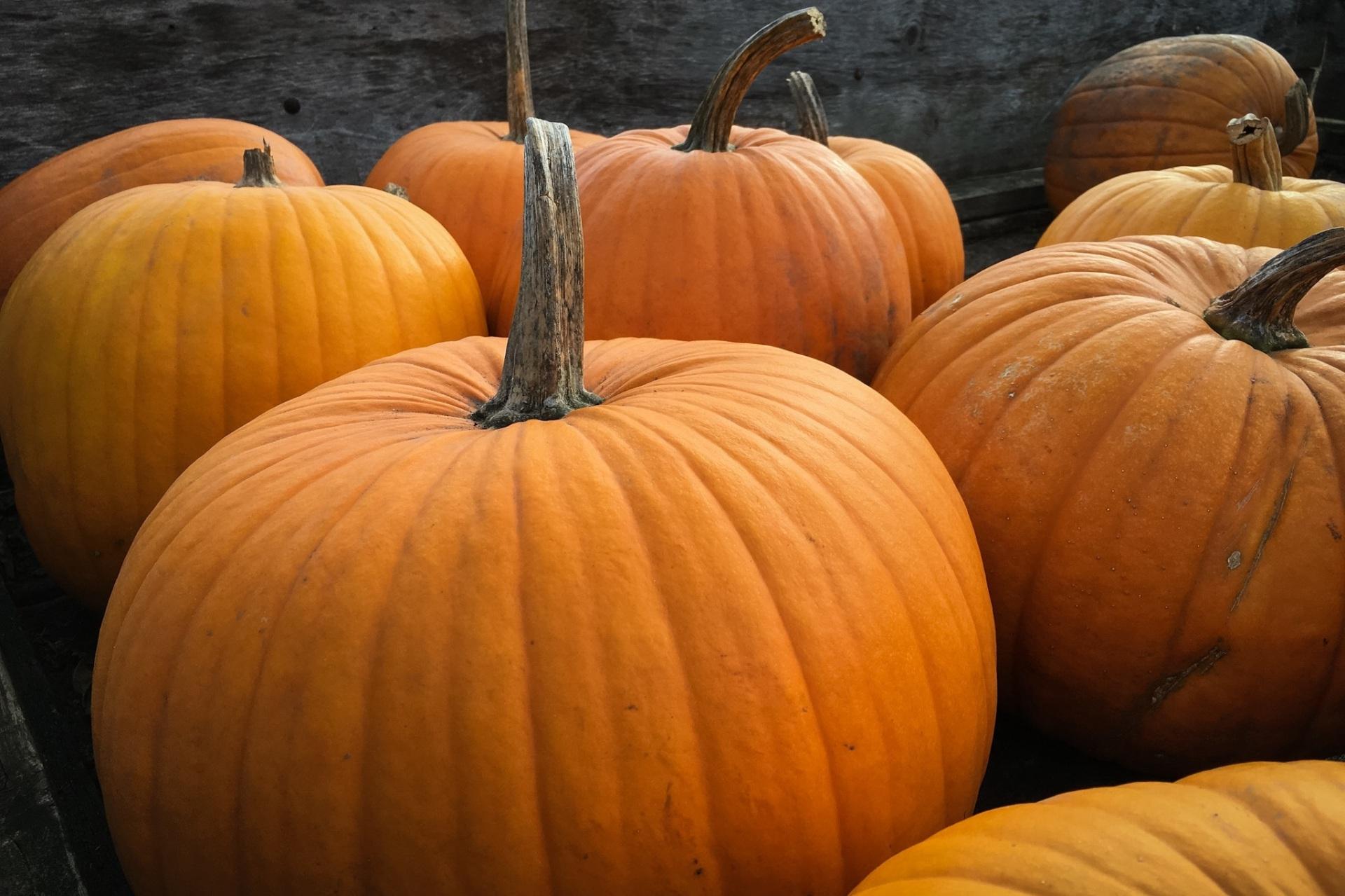 pumpkins-984207