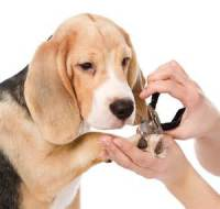 nail clipping dog grooming folkestone kent