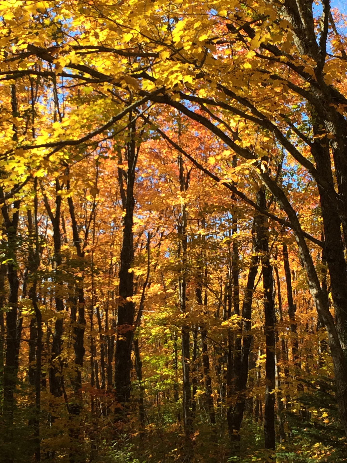 Off the beaten path...Spectacular Fall drive