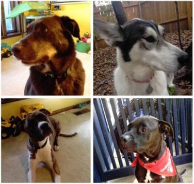 Foster Homes for Dogs Needed!!