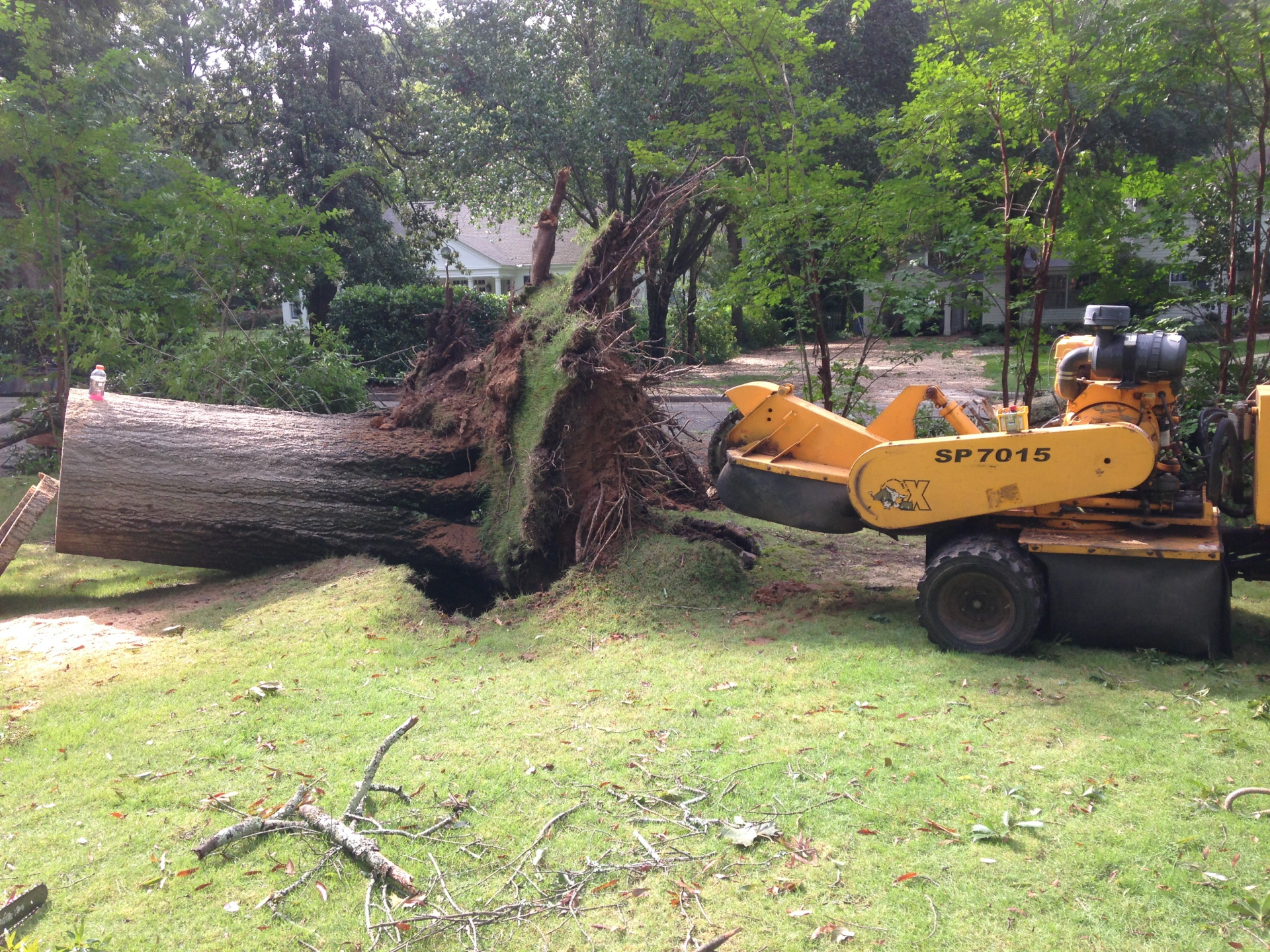 Blow Over Stump in Montgomery, AL