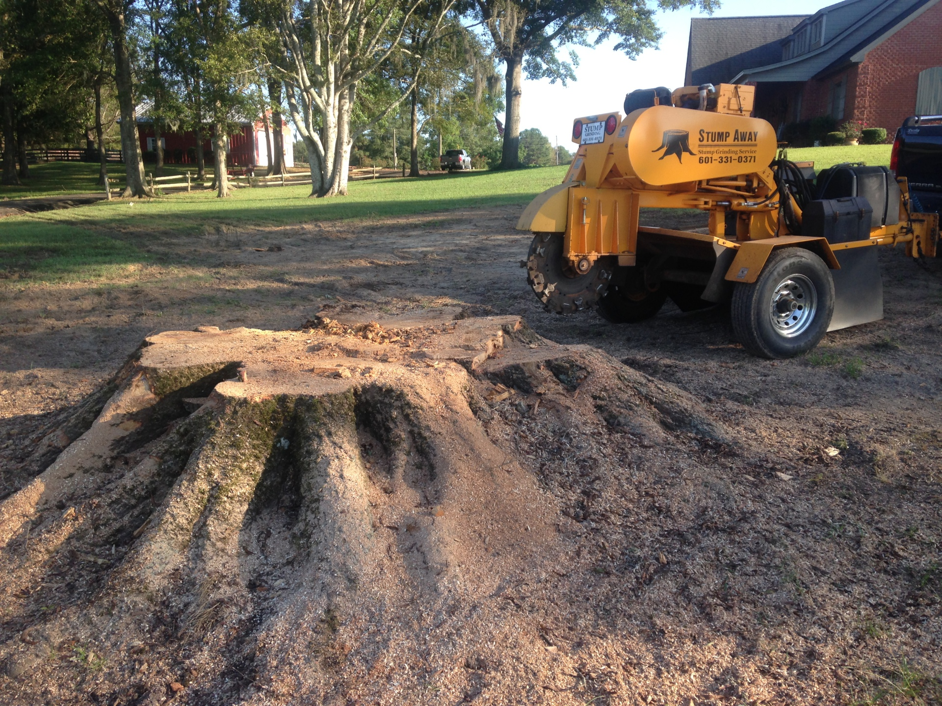Grinding a monster stump in Pike Rd, AL