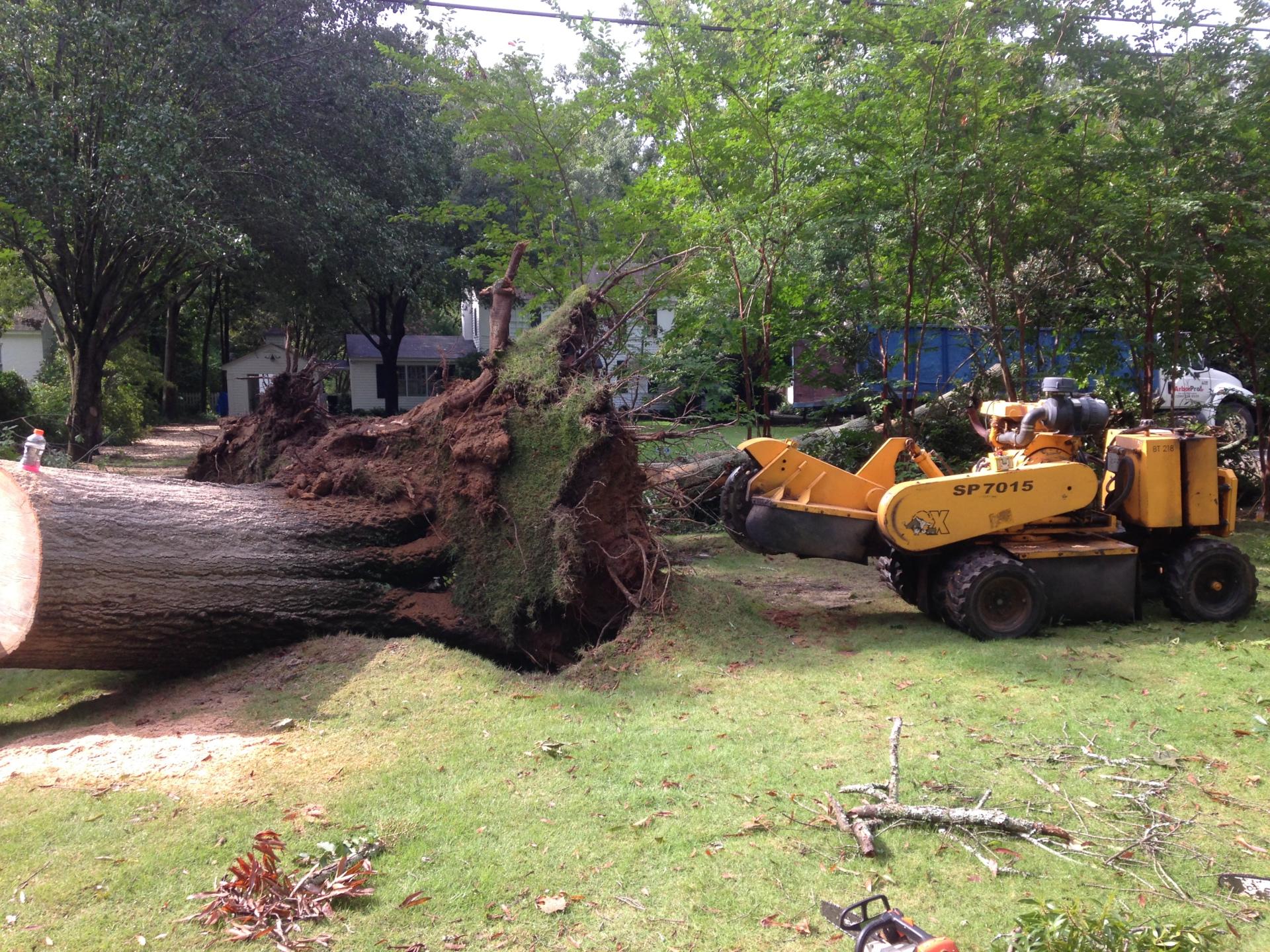 Blown over stump in Montgomery, AL