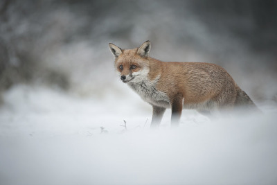 Animal shot