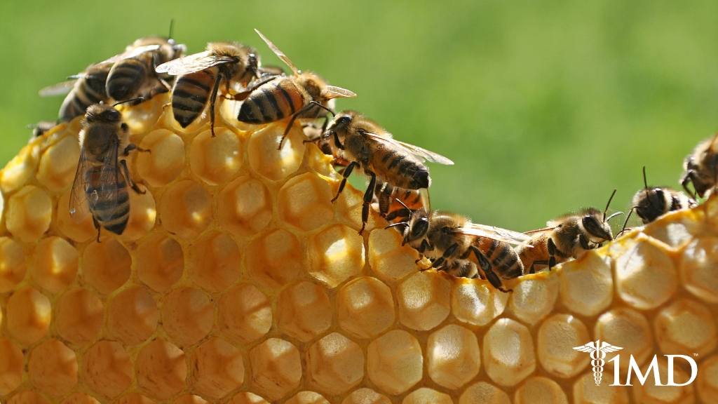 Could Probiotics Save the Bees? The Amazing Benefits of Microbials