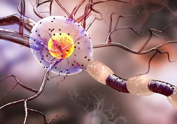Parkinson's Disease Symptoms - Immunity - 1MD