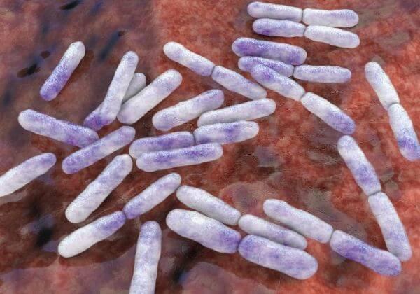 Prebiotics 101: How To Fuel Your Probiotics