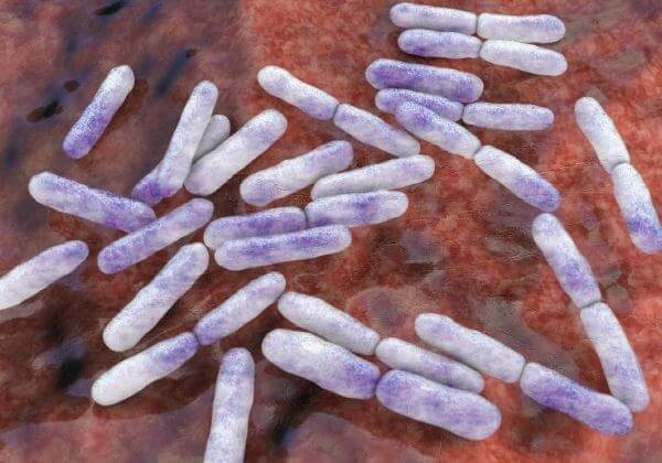 Prebiotics 101: How To Fuel Your Probiotics | 1MD