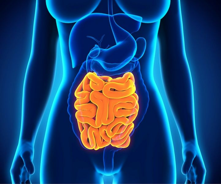 From Mouth To Colon The Journey Of Your Digestive Enzymes 1md