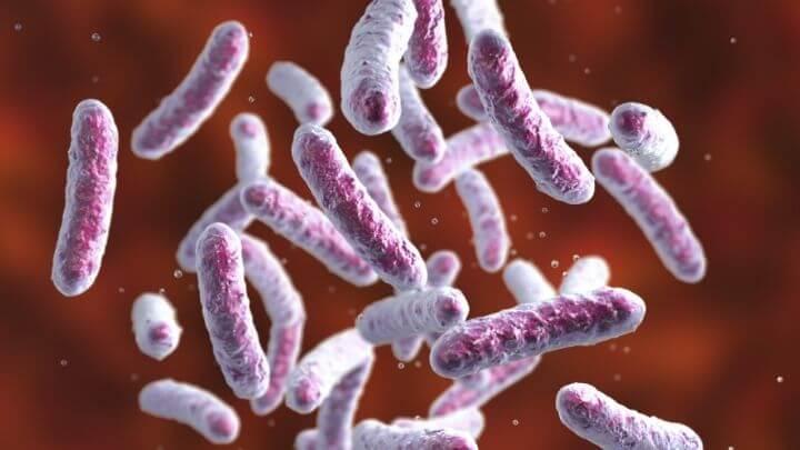 Good bacteria, probiotics